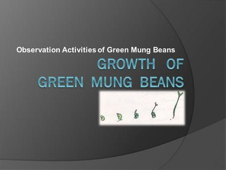 Observation Activities of Green Mung Beans. The scientific method of Growth of green mung beans 1. Observation The growth of green beans in different.