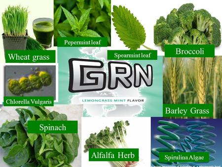 Wheat grass Spinach Alfalfa Herb Chlorella Vulgaris Spirulina Algae Barley Grass Broccoli Pepermint leaf Spearmint leaf.