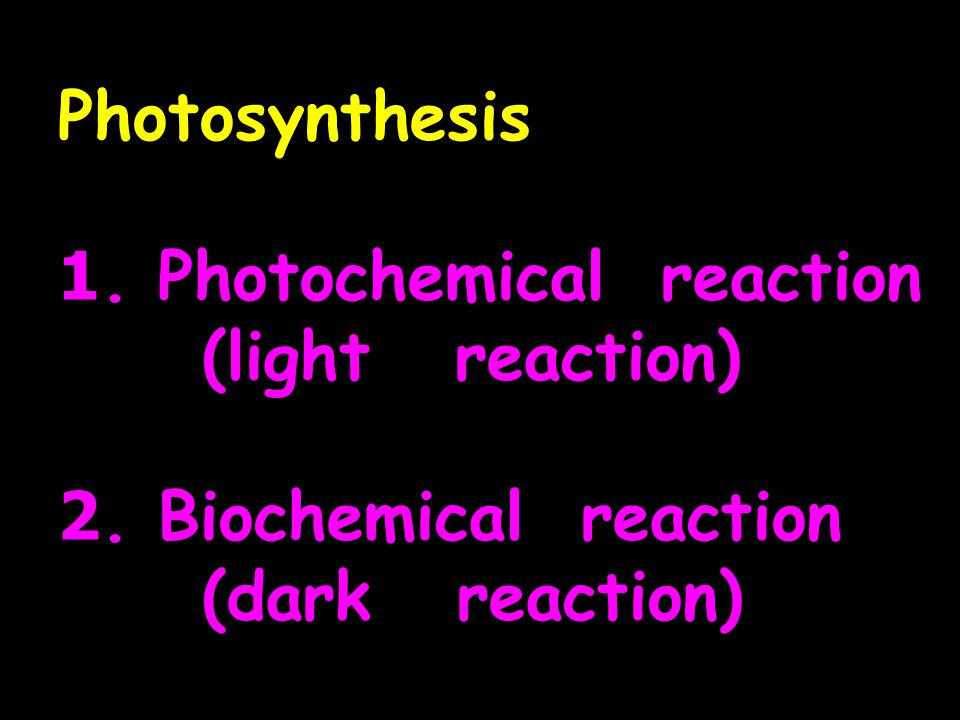 ภาพรวม Photochemical และ Biochemical reactions