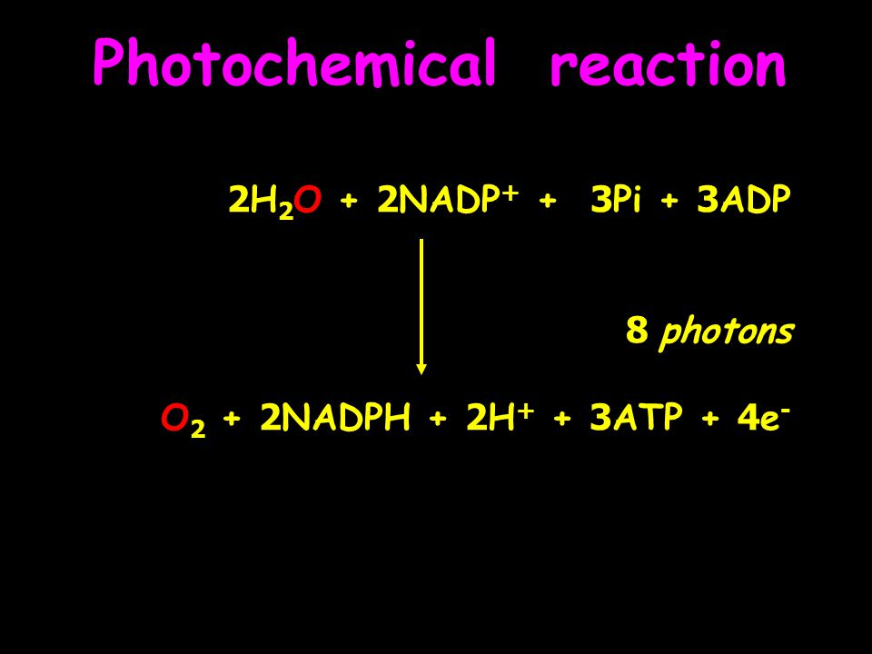 Biochemical reaction (dark reaction) light-independent reaction 1.