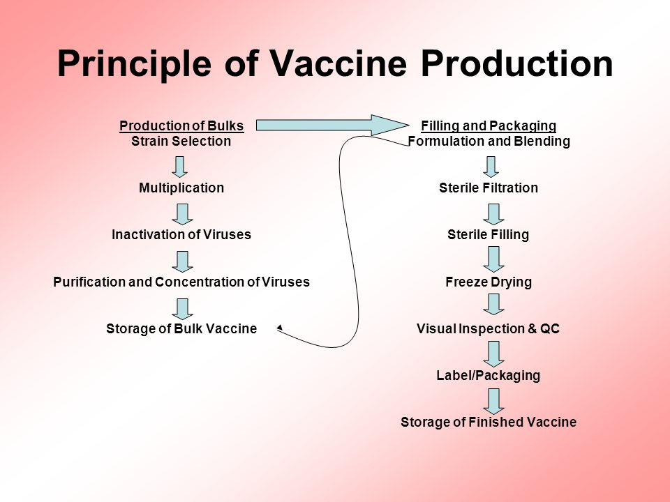 Industrial Production of Influenza Vaccine Egg production (poultry) Egg preparation and incubation (hatchery) Inocuation and viral incubation Harvesting, clarification and concentration Purification Splitting and inactivation Blending, filling and packaging