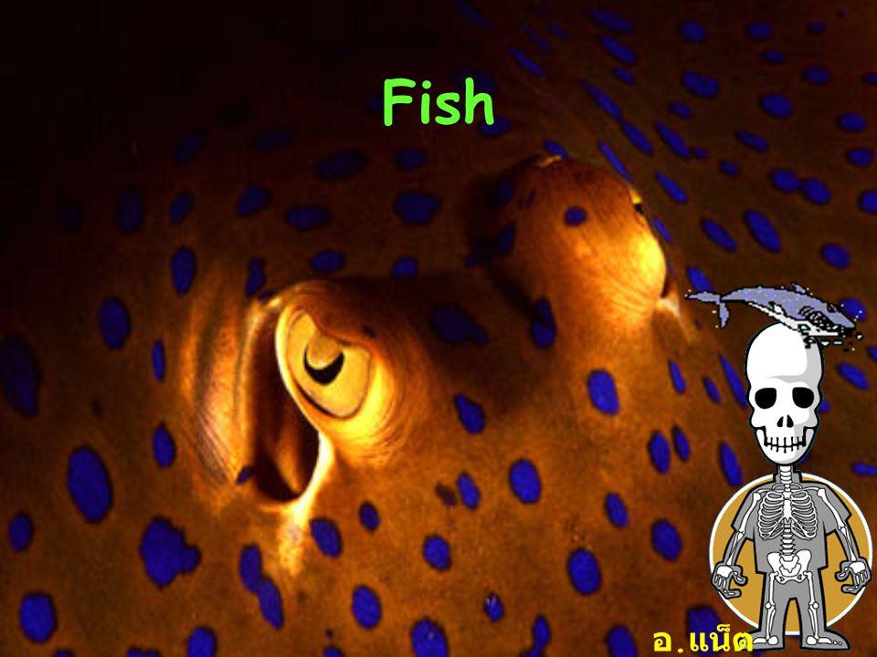 ปลาที่ยังมีชีวิตอยู่ในปัจจุบันมี 3 กลุ่มคือ 1.