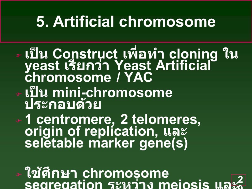 30 Yeast Artificial chromosome / YAC