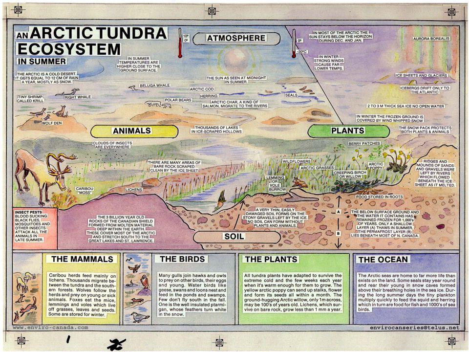 36 ระบบนิเวศทาง ICT (ICT Ecosystem) Ecosystem หมายถึงการที่หลายสิ่งหลายอย่างมาอยู่ ร่วมกัน และต้องพึ่งพาอาศัยกัน (ปกติ เรามักหมายถึง ระบบนิเวศ ของสิ่งแวดล้อม) เมื่อนำมาใช้เป็น ICT Ecosystem เราหมายถึงระบบ คอมพิวเตอร์ ข้อมูล โปรแกรม ระบบสื่อสาร และคน ซึ่งมา จากหลายบริษัท หลายประเทศ แต่สามารถมาทำงาน ร่วมกันได้เป็นอย่างดี ในระบบนิเวศ มีทั้งของดีและของไม่ดี มีทั้งถนนเปิด และ บ้านที่ปิดมิดชิด ระบบนิเวศที่ดี คือทุกคนอยู่ร่วมกันได้อย่างมีความสุข ไม่มี ผู้ใดปล่อยมลภาวะออกมาให้ผู้อื่นเดือดร้อน หรือเกิดโรค ระบาด