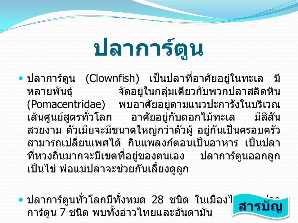 พันธุ์ปลาการ์ตูนที่พบใน ประเทศไทย ปลาการ์ตูนส้มขาว (Clown Anemonefish) ปลาการ์ตูนส้มขาว (Clown Anemonefish) ปลาการ์ตูนอินเดียแดง (Pink Skunk Anemonefish) ปลาการ์ตูนอินเดียแดง (Pink Skunk Anemonefish) ปลาการ์ตูนแดงดำ (Red Saddleback Anemonefish) ปลาการ์ตูนแดงดำ (Red Saddleback Anemonefish) ปลาการ์ตูนมะเขือเทศ (Tomato Anemonefish) ปลาการ์ตูนมะเขือเทศ (Tomato Anemonefish) ปลาการ์ตูนอานม้า (Saddleback Anemonefish) ปลาการ์ตูนอานม้า (Saddleback Anemonefish) ปลาการ์ตูนลายปล้อง (Clark's Anemonefish) ปลาการ์ตูนลายปล้อง (Clark's Anemonefish) ปลาการ์ตูนอินเดียน (Yellow Skunk Anemonefish) ปลาการ์ตูนอินเดียน (Yellow Skunk Anemonefish)