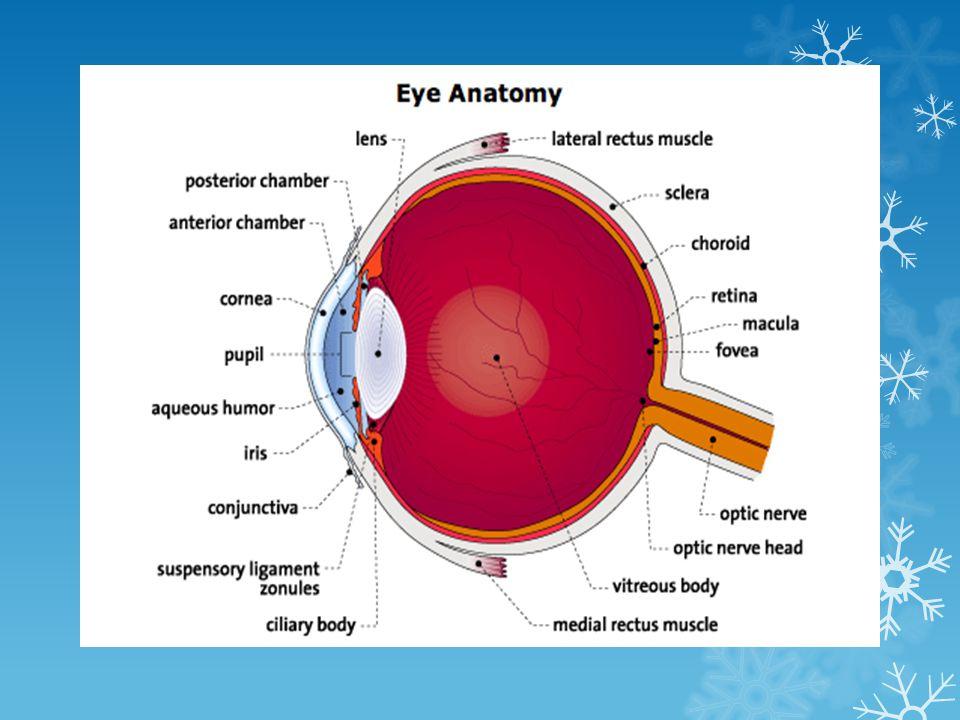 โปรตีนแก้วตาเสื่อมสภาพ ขุ่นมัว (Denature of lens protein) --------> ต้อกระจก ตาลึก หนังตาตก ขอบหนังตาม้วนเข้า - ออกได้ง่าย