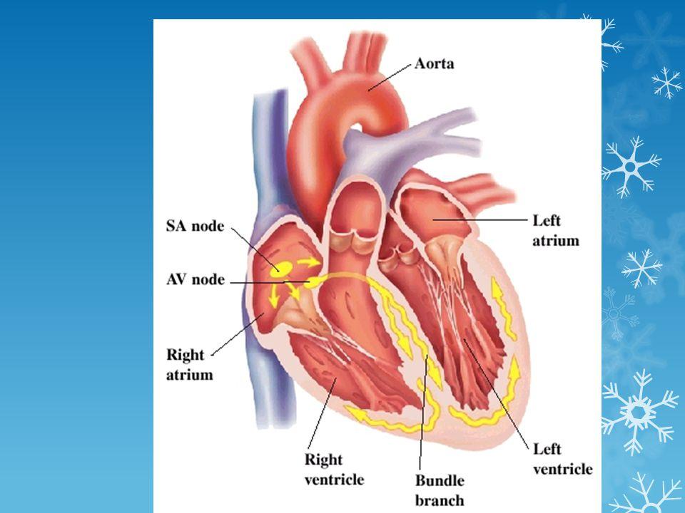 ระบบหัวใจ / หลอด เลือด ↓ อัตราการเต้นของหัวใจ ตอบสนอง ต่อการเปลี่ยนท่า -----> หน้ามืดเป็นลมเมื่อ เปลี่ยนท่า ↓ เซลล์ประสาทหัวใจ ( เกิดพังผืด ) -----> ↑ หัว ใจเต้นพลิ้ว