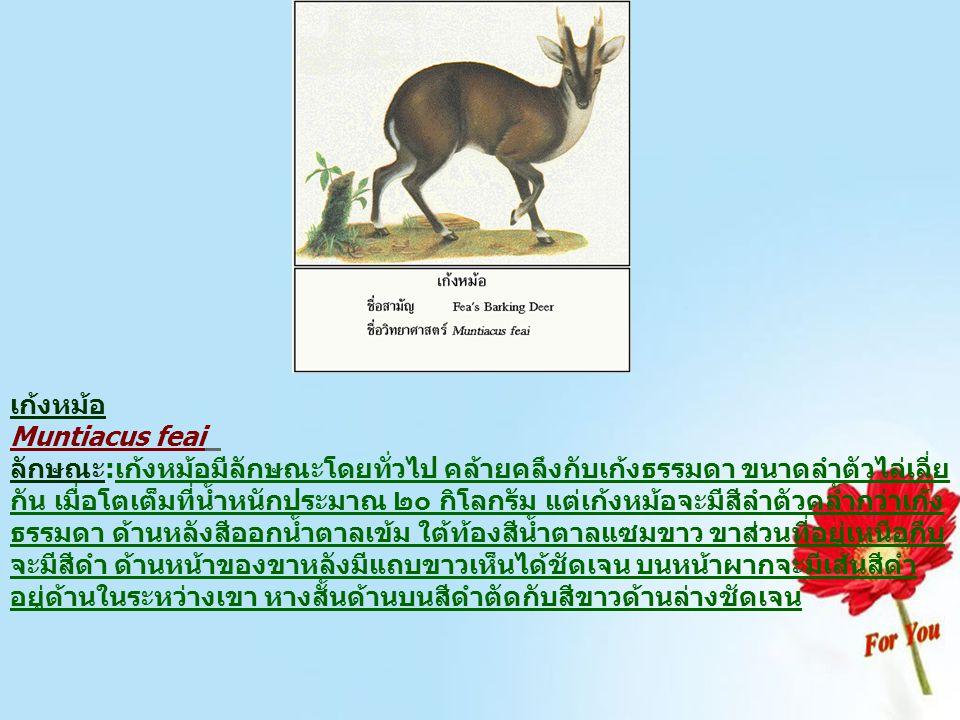 พะยูนหรือหมูน้ำ Dugong dugon ลักษณะ:พะยูนจัดเป็นสัตว์เลี้ยงลูกด้วยนมชนิดหนึ่ง ที่อาศัยอยู่ใน น้ำ มีลำตัวเพรียวรูปกระสวย หางแยกเป็นสองแฉก วางตัวขนานกับ พื้นในแนวราบ ไม่มีครีบหลัง ปากอยู่ตอนล่าง ของส่วนหน้าริม ฝีปากบนเป็นก้อนเนื้อหนา ลักษณะเป็นเหลี่ยมคล้ายจมูกหมู ตัว อายุน้อยมีลำตัวออกขาว ส่วนตัวเต็มวัยมีสีชมพูแดง เมื่อโตเต็มวัย จะมีน้ำหนักตัวประมาณ ๓๐๐ กิโลกรัม