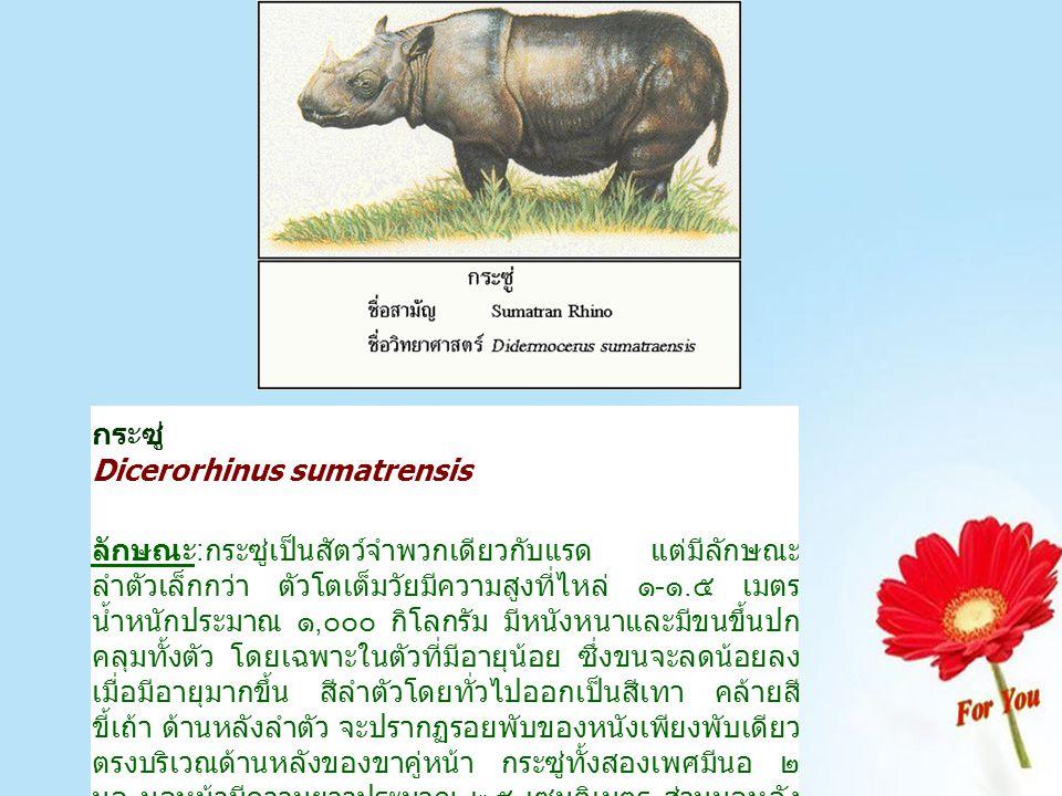 กูปรีหรือโคไพร Bosauveli ลักษณะ:กูปรีเป็นสัตว์ป่าชนิดหนึ่ง เช่นเดียวกับ กระทิงและวัว แดง เมื่อโตเต็มที่มีความสูงที่ไหล่ ๑.๗-๑.๙ เมตร น้ำหนัก ๗๐๐- ๙๐๐ กิโลกรัม ตัวผู้มีขนาดลำตัวใหญ่กว่าตัวเมียมาก สีโดยทั่วไป เป็นสีเทาเข้มเกือบดำ ขาทั้ง ๔ มีถุงเท้าสีขาวเช่นเดียวกับกระทิง ในตัวผู้ที่มีอายุมาก จะมีเหนียงใต้คอยาวห้อยลงมาจนเกือบจะถึง ดิน เขากูปรีตัวผู้กับตัวเมียจะแตกต่างกัน โดยเขาตัวผู้จะโค้งเป็น วงกว้าง แล้วตีวงโค้งไปข้างหน้า ปลายเขาแตกออกเป็นพู่คล้าย เส้นไม้กวาดแข็ง ตัวเมียมีเขาตีวง แคบแล้วม้วนขึ้นด้านบน ไม่มีพู่ ที่ปลายเขา