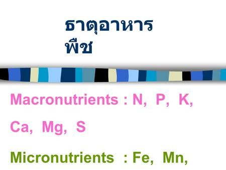ธาตุอาหาร พืช Macronutrients : N, P, K, Ca, Mg, S Micronutrients : Fe, Mn, Zn, Cu, B, Mo, Cl.