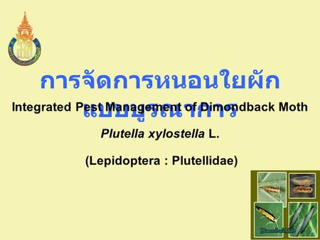 การจัดการหนอนใยผัก แบบบูรณาการ Integrated Pest Management of Dimondback Moth Plutella xylostella L. (Lepidoptera : Plutellidae)