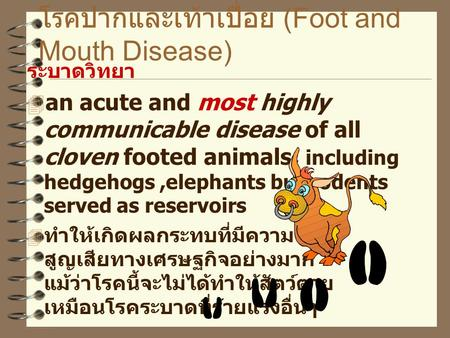 โรคปากและเท้าเปื่อย (Foot and Mouth Disease) ระบาดวิทยา  an acute and most highly communicable disease of all cloven footed animals; including hedgehogs,elephants.