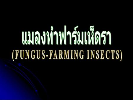 (FUNGUS-FARMING INSECTS)