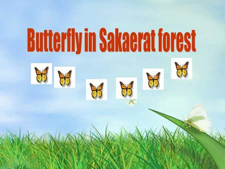 Butterfly in Sakaerat forest