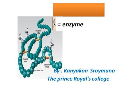 = enzyme The prince Royal's college By. Kanyakon Sroymano.