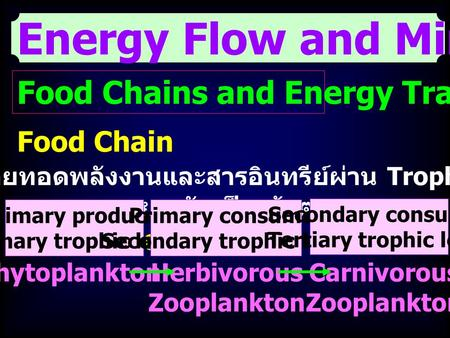Energy Flow and Mineral Cycling