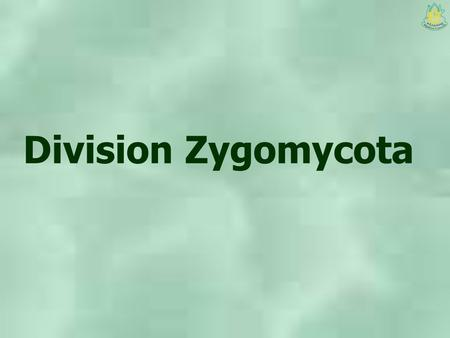 Division Zygomycota. Main characteristics Somatic stage Coenocytic hyphae Haploid Cell wall are mainly chitin, chitosan and polyglucosamine Spindle pole.