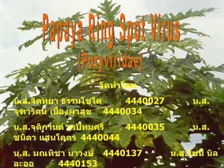 Papaya Ring Spot Virus (Potyviridae) จัดทำโดย