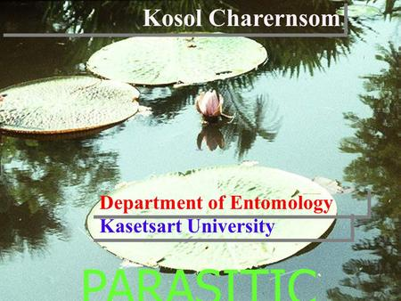 PARASITIC INSECTS Kosol Charernsom Department of Entomology