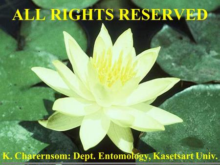 ALL RIGHTS RESERVED K. Charernsom: Dept. Entomology, Kasetsart Univ.