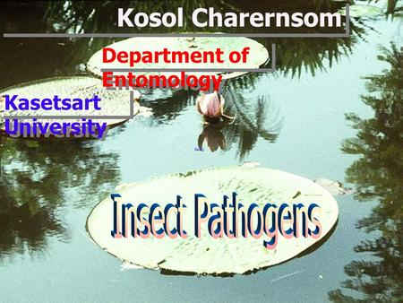 Kosol Charernsom Kasetsart University Department of Entomology.