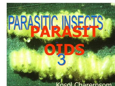 PARASITIC INSECTS PARASITOIDS 3 Kosol Charernsom.