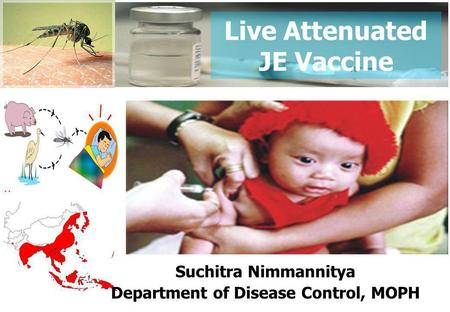 Live Attenuated JE Vaccine Suchitra Nimmannitya Department of Disease Control, MOPH.