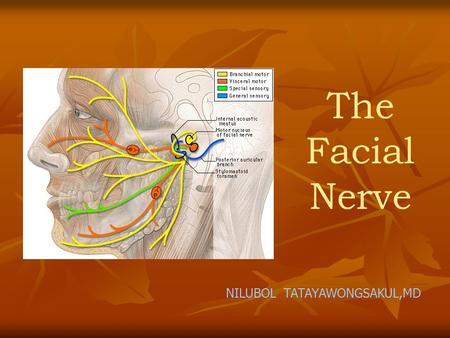 The Facial Nerve NILUBOL TATAYAWONGSAKUL,MD. Anatomy of the facial nerve 1. Intracranial 2. Intratemporal 3. Extratemporal.