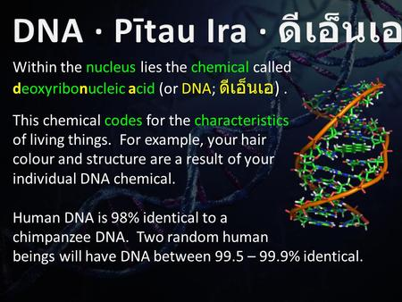 Within the nucleus lies the chemical called deoxyribonucleic acid (or DNA; ดีเอ็นเอ ). This chemical codes for the characteristics of living things. For.