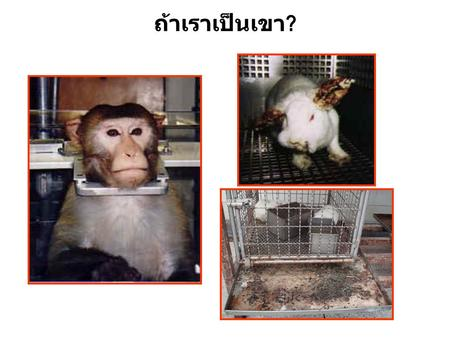ถ้าเราเป็นเขา ?. Scientific purposes of animal experiment 1.To search for new knowledge 2.To diagnose disease 3.To test new therapeutic techniques and.
