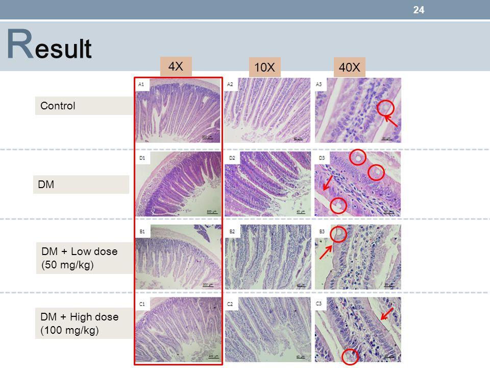 Result 4X 10X 40X ทำไมศึกษาในส่วนของ duodenum Control DM DM + Low dose