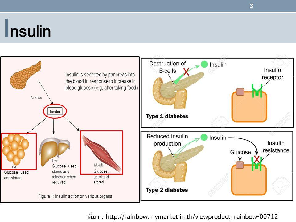 Insulin ที่มา : http://rainbow.mymarket.in.th/viewproduct_rainbow-00712