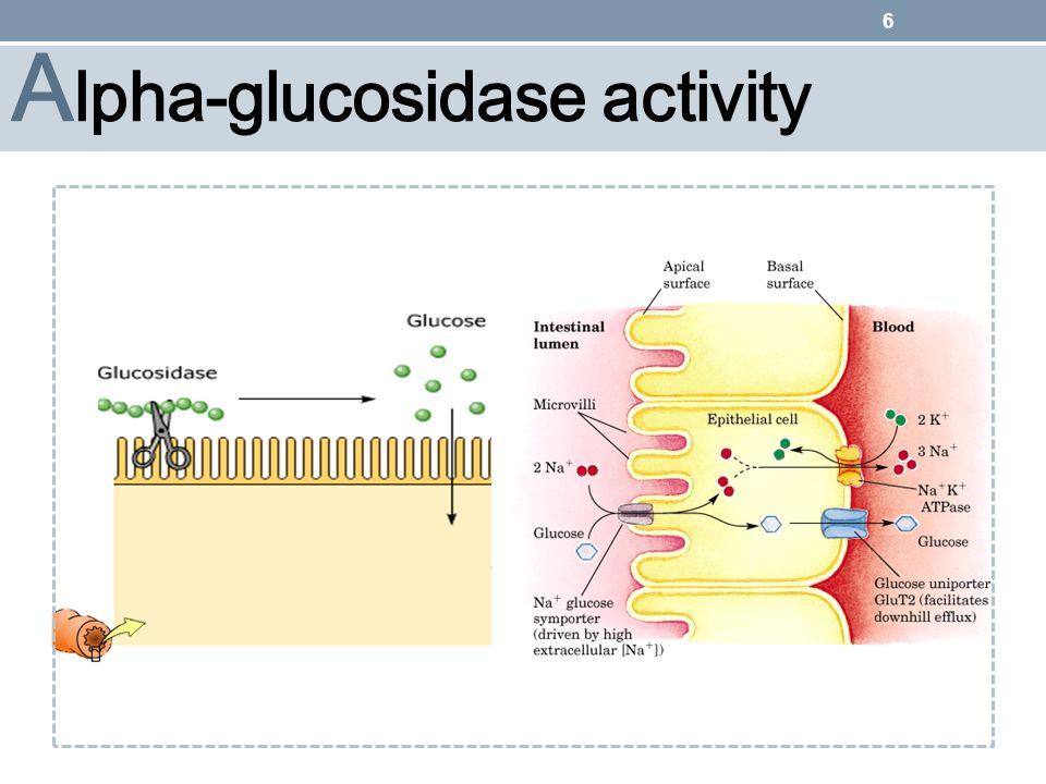 Alpha-glucosidase activity