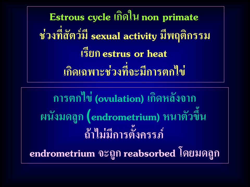Estrous cycle เกิดใน non primate