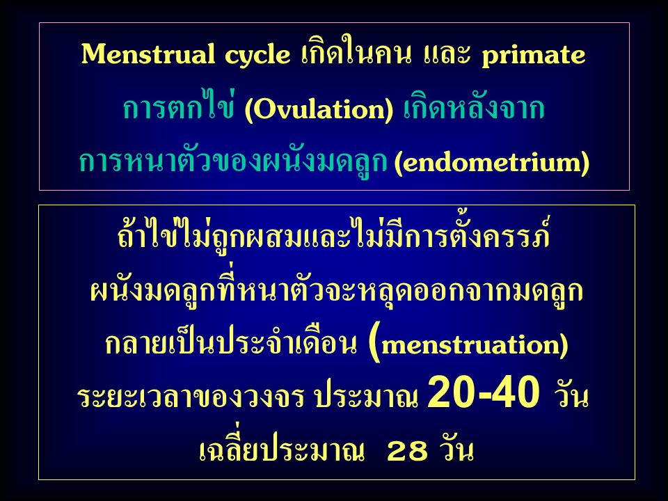 Menstrual cycle เกิดในคน และ primate การตกไข่ (Ovulation) เกิดหลังจาก