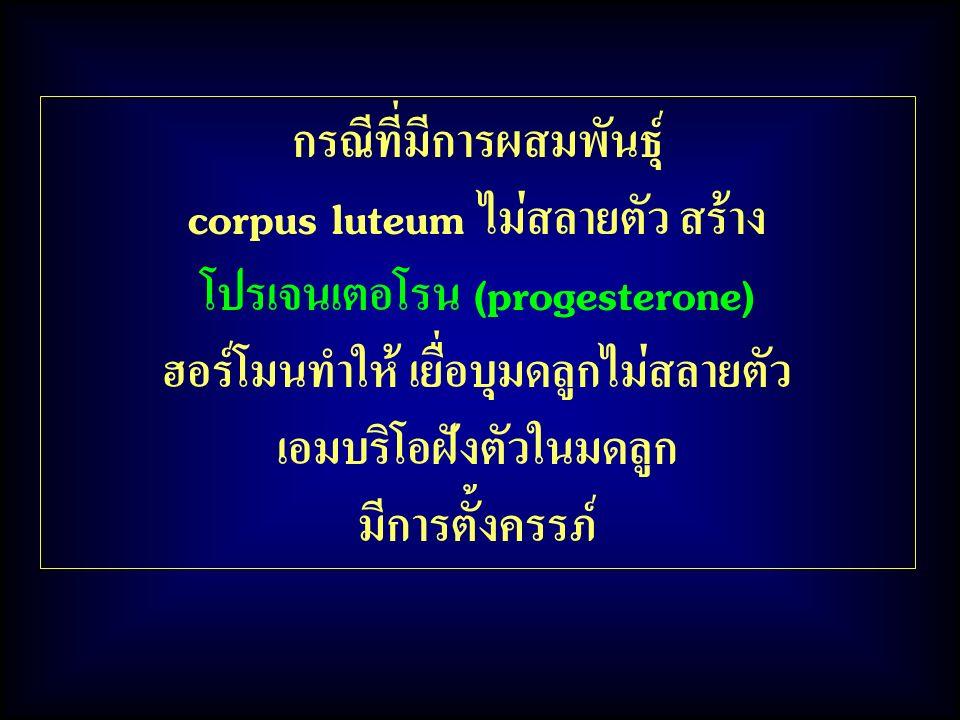 กรณีที่มีการผสมพันธุ์ corpus luteum ไม่สลายตัว สร้าง
