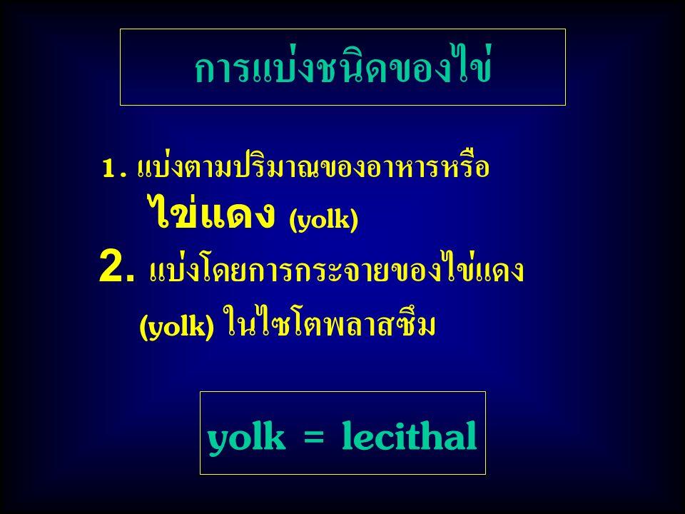 yolk = lecithal การแบ่งชนิดของไข่ 2. แบ่งโดยการกระจายของไข่แดง