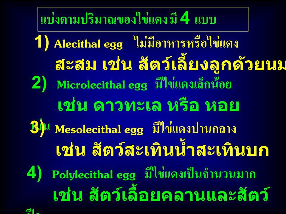 แบ่งตามปริมาณของไข่แดง มี 4 แบบ