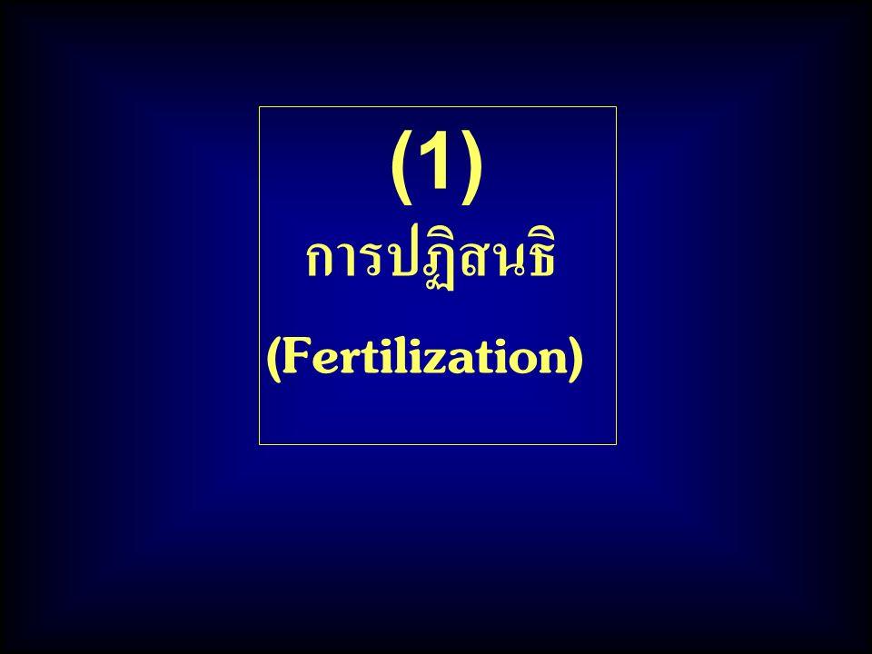 (1) การปฏิสนธิ (Fertilization)