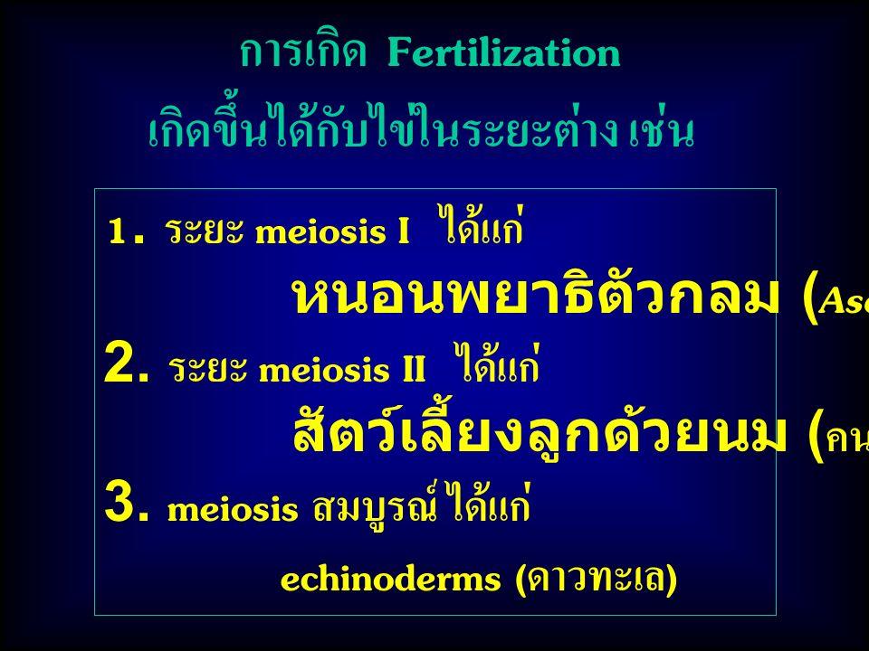 การเกิด Fertilization เกิดขึ้นได้กับไข่ในระยะต่าง เช่น