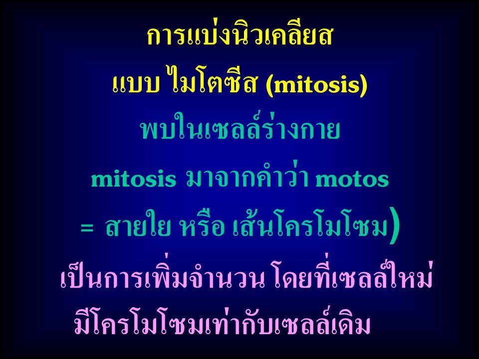 mitosis มาจากคำว่า motos = สายใย หรือ เส้นโครโมโซม)