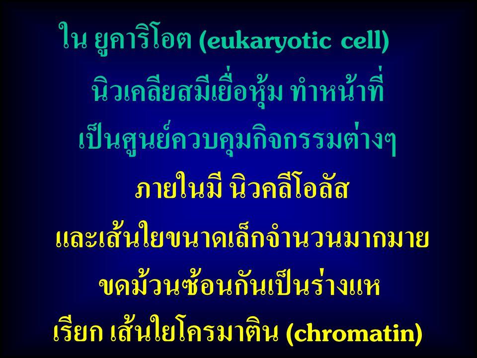 ใน ยูคาริโอต (eukaryotic cell) นิวเคลียสมีเยื่อหุ้ม ทำหน้าที่