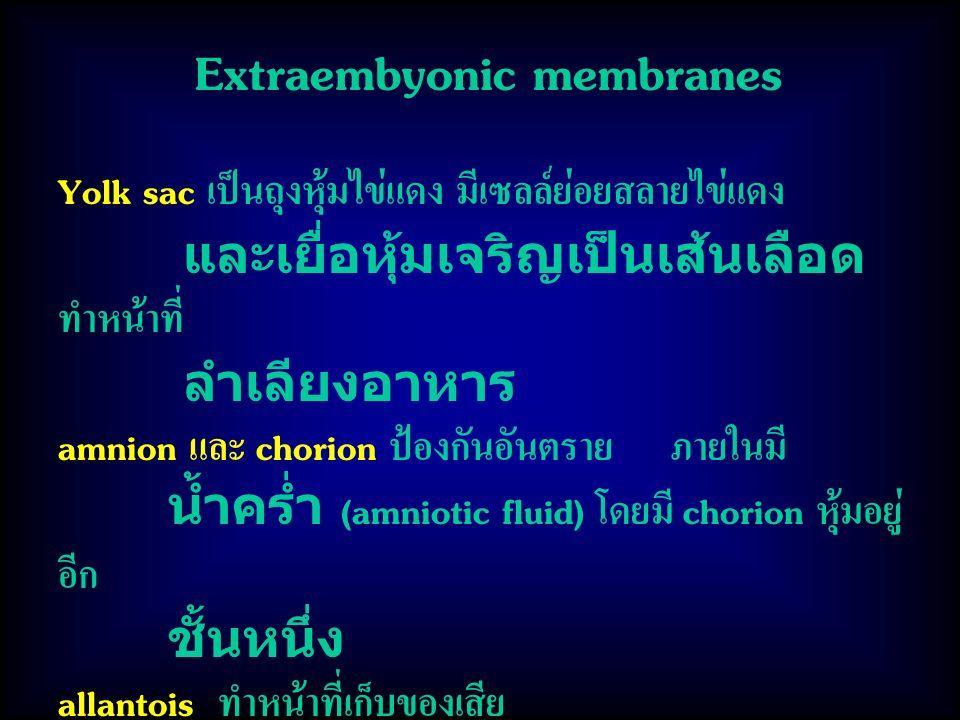 Extraembyonic membranes