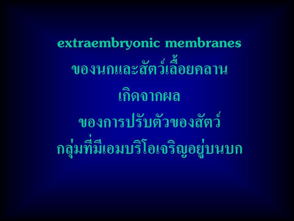 extraembryonic membranes ของนกและสัตว์เลื้อยคลาน เกิดจากผล