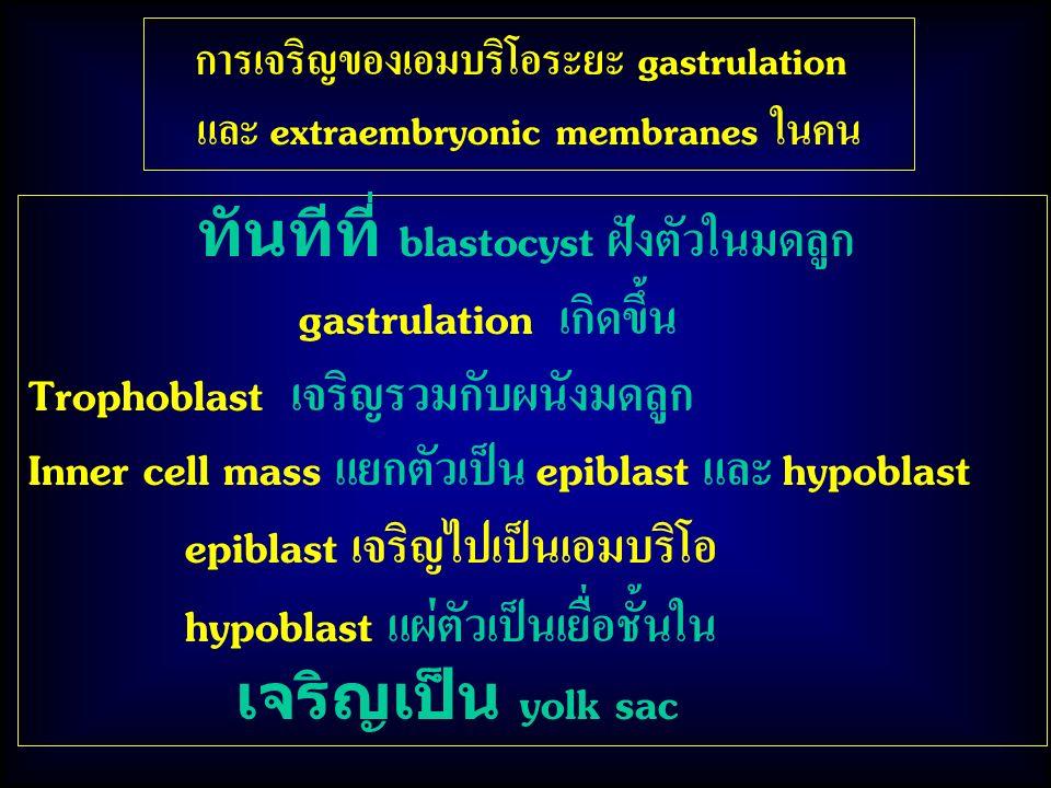 การเจริญของเอมบริโอระยะ gastrulation และ extraembryonic membranes ในคน