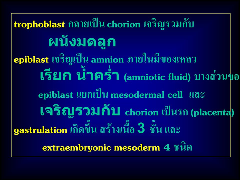 trophoblast กลายเป็น chorion เจริญรวมกับ
