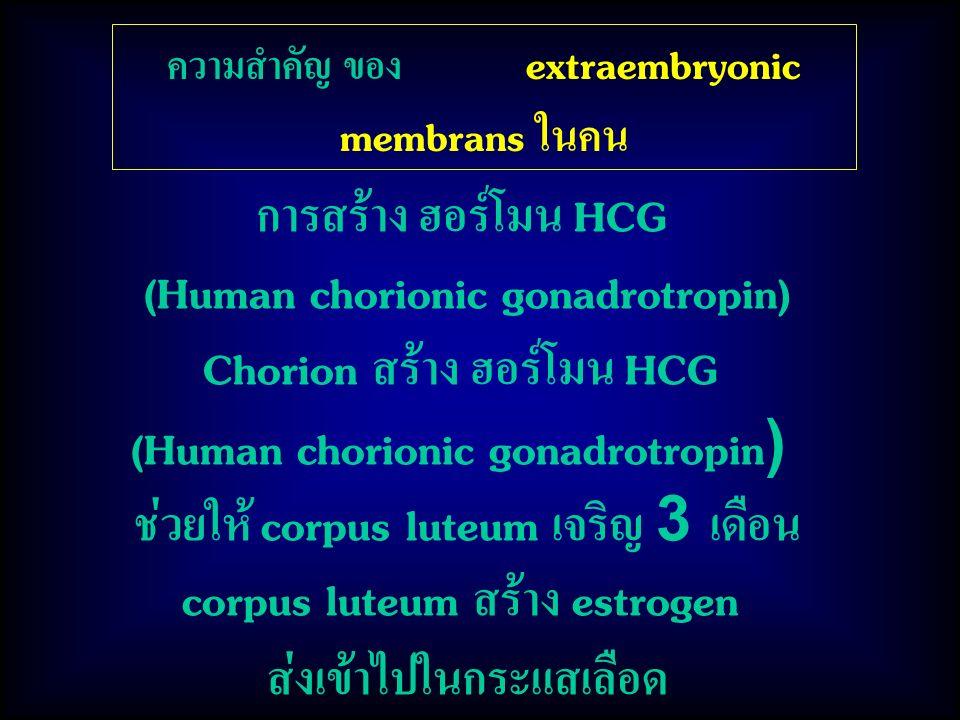 (Human chorionic gonadrotropin) Chorion สร้าง ฮอร์โมน HCG