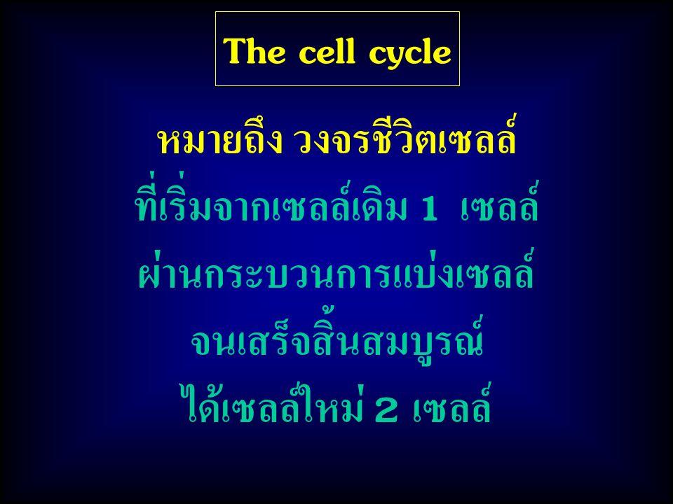 หมายถึง วงจรชีวิตเซลล์ ที่เริ่มจากเซลล์เดิม 1 เซลล์