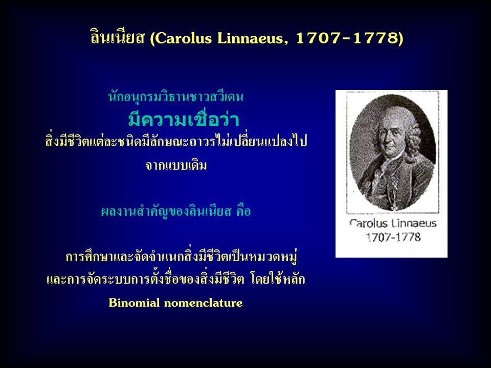 ลินเนียส (Carolus Linnaeus, 1707-1778)