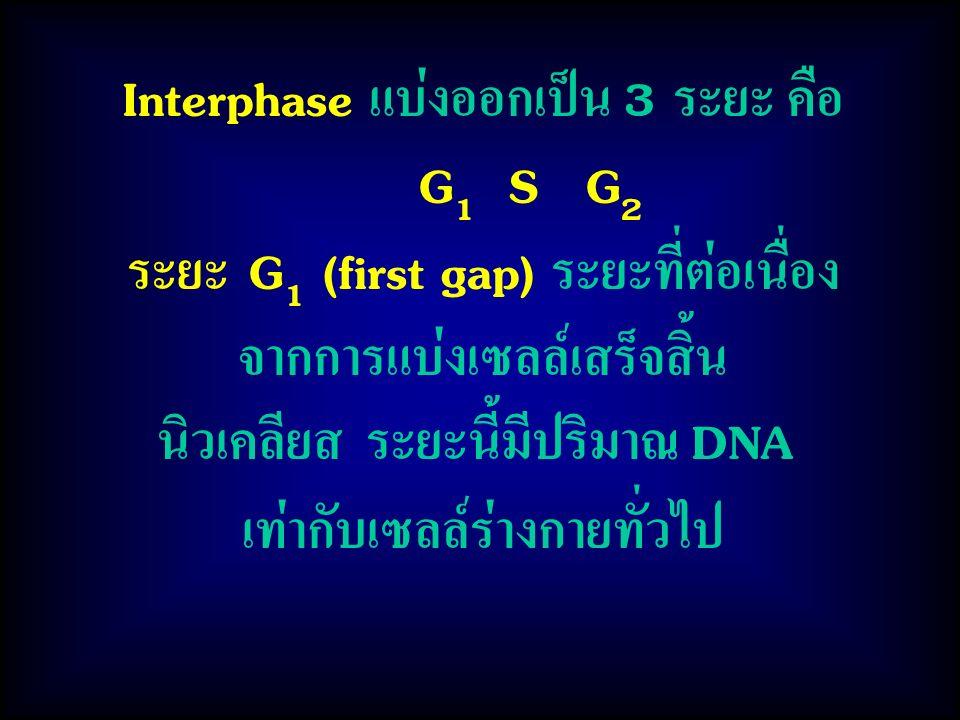 Interphase แบ่งออกเป็น 3 ระยะ คือ G1 S G2